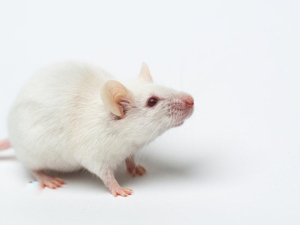 動物実験をゼロへ。未来の新薬開発に期待高まる、薬の作用をコンピュータ・シュミレーションする研究 #ニュース #サイエンス #大学研究 #動物 #テクノロジー https://t.co/56FaJDaWdh