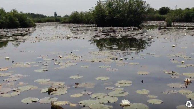 Voor de Kortenhoefse plassen zijn we bezig met een watergebiedsplan. Het is namelijk belangrijk dat er voldoende planten en dieren in dit #natuurgebied kunnen leven. In deze video zie je hoe de verkenning van dit gebied in zijn werk gaat: https://t.co/C91T7dVRK1 #Kortenhoef