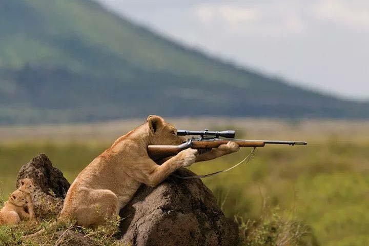 Картинки охотник с ружьем приколы
