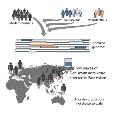 New evidence suggests that archaic #Denisovans interbred with humans not once, but twice! This admixture shaped modern human #genomes. Read the new study from Browning et al in this week's issue of Cell! #hominin #ancestors #evolution https://t.co/iOvrkTJ5tT