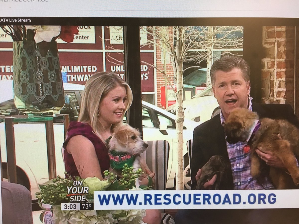 All the puppies today on @GoodAfternoonAR! Happy #NationalPuppyDay!