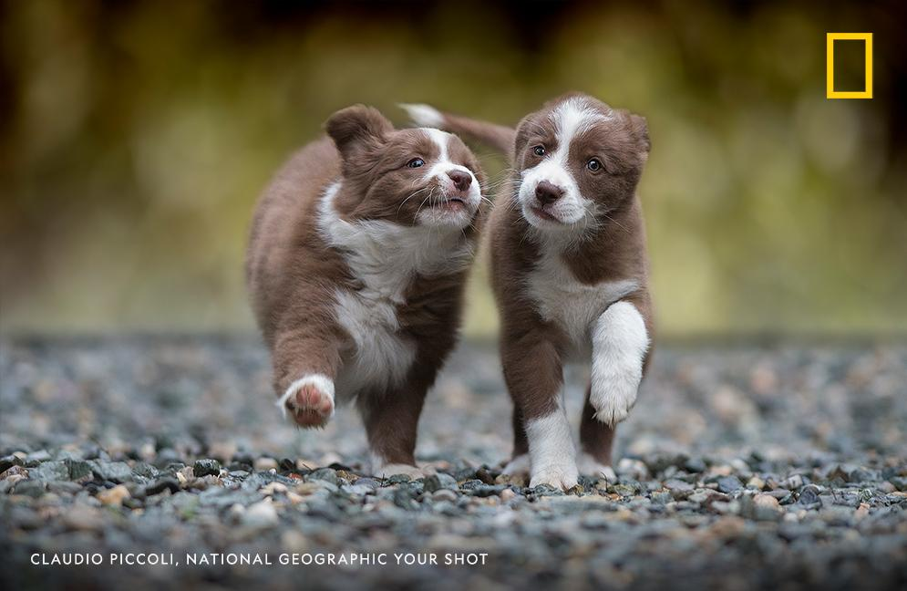 National Geographic Magazine On Twitter Today Is Nationalpuppyday