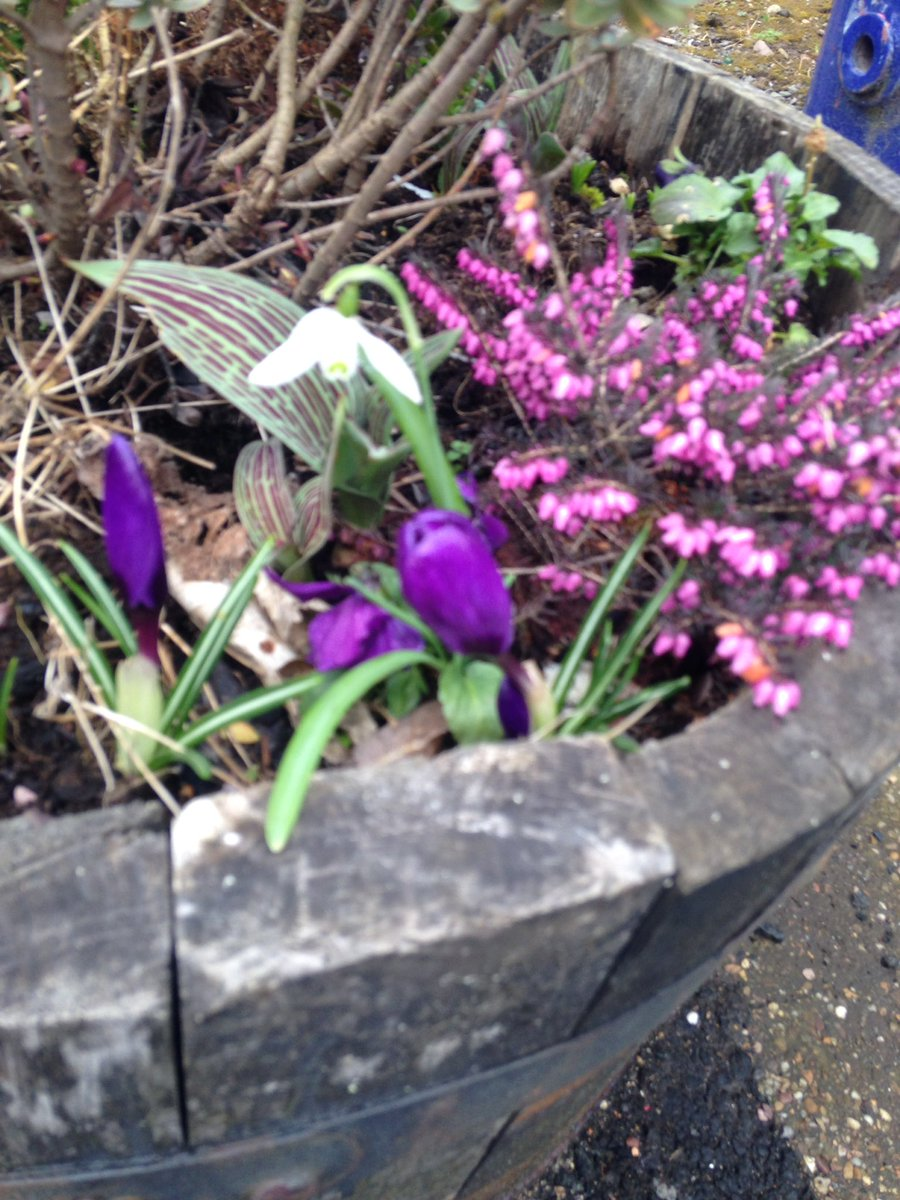 Recently visited the @LanCreditUnion and stopped at #Blantyre station ... lovely wee #snowdrop #community #growingthings #stationadopters #springishere<br>http://pic.twitter.com/WHOi40iUqJ