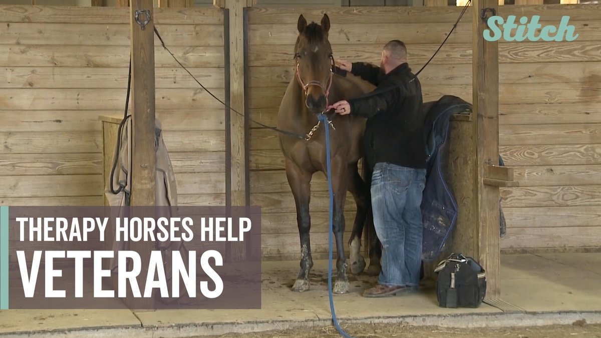 Retired Army veteran runs horse therapy program for fellow veterans https://t.co/lRk0fLh5p1