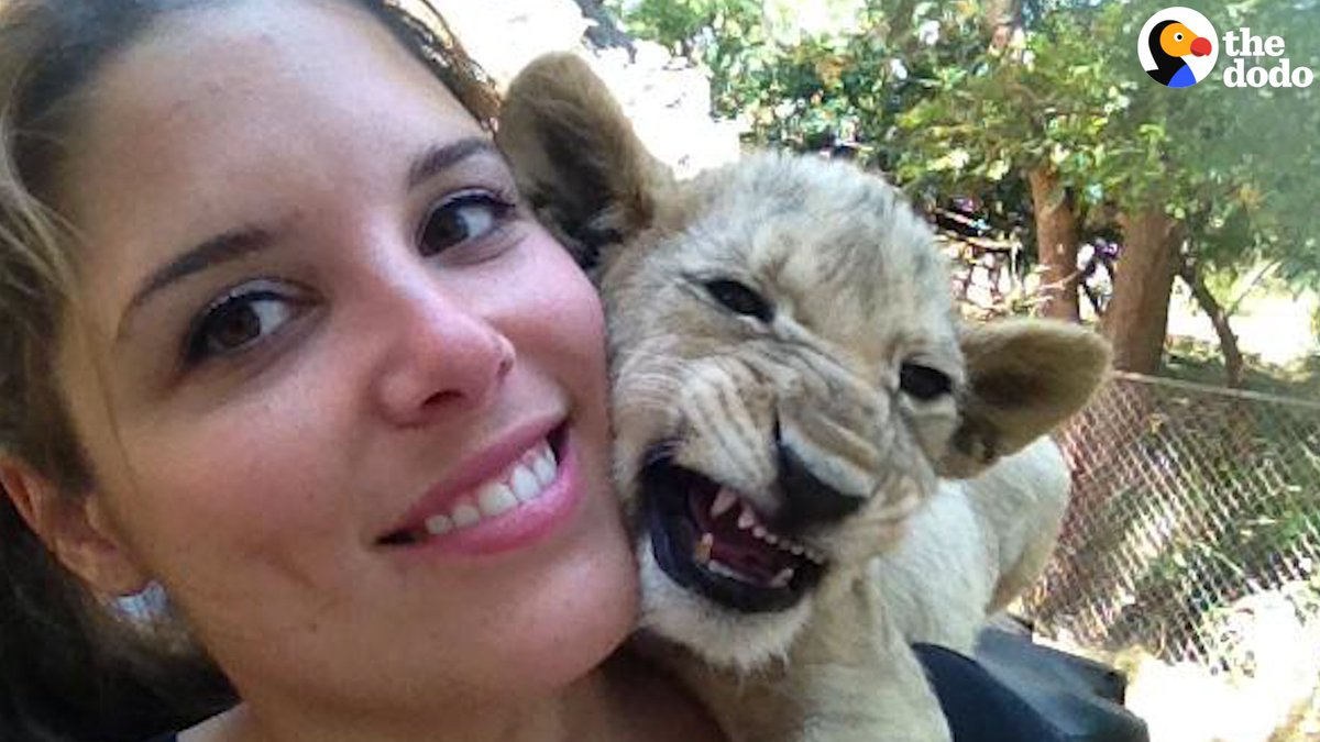This woman volunteered to help animals in Africa — and ended up raising baby lions to be killed. It happens all the time, and most tourists have no idea theyre part of it. (via @Blood_Lions)