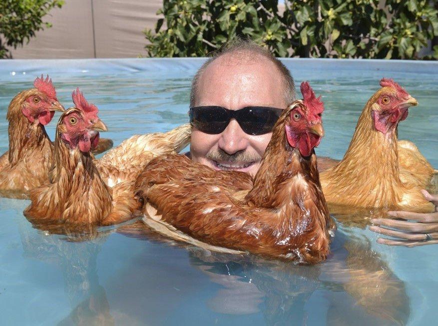 Подписать, смешные картинку с курицей