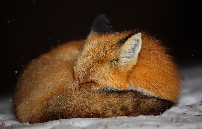 #WorldSleepDay mandatory naps for everyone today! 😴