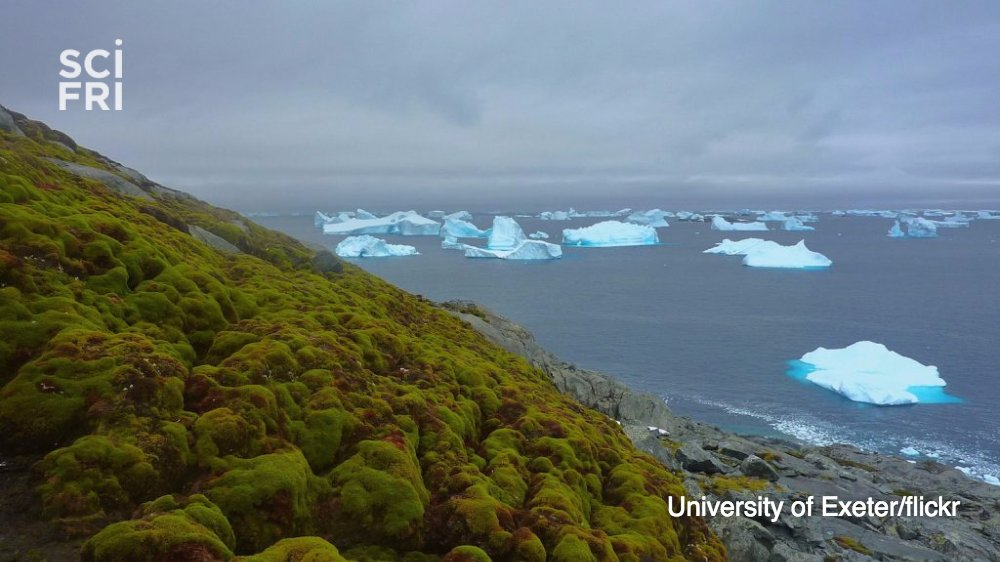 You don't usually see much green in Antarctica. But thanks to climate change, the color is becoming more common. https://t.co/h2Jj29qS4t