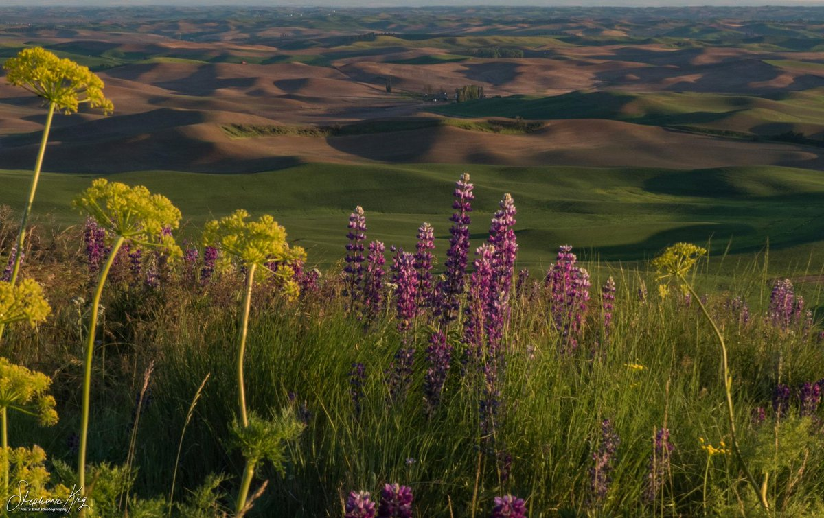 RT @AvistaUtilities: View of the #Palouse from Steptoe Butte. Photo courtesy of Trails End Photography. #ad https://t.co/0oqBE1NtCl