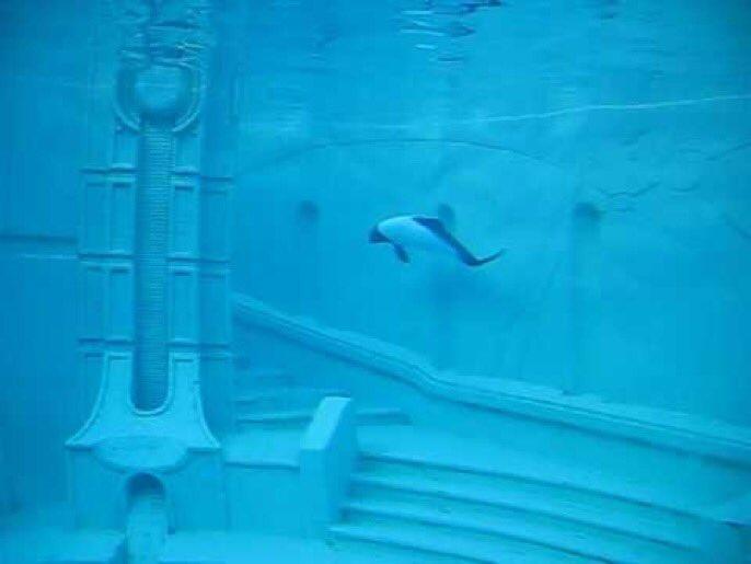 Captivity is Cruel - we will keep exposi...