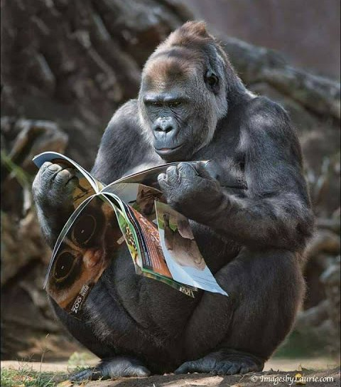 I love these primates 😃🐒 #wildlifephotog...