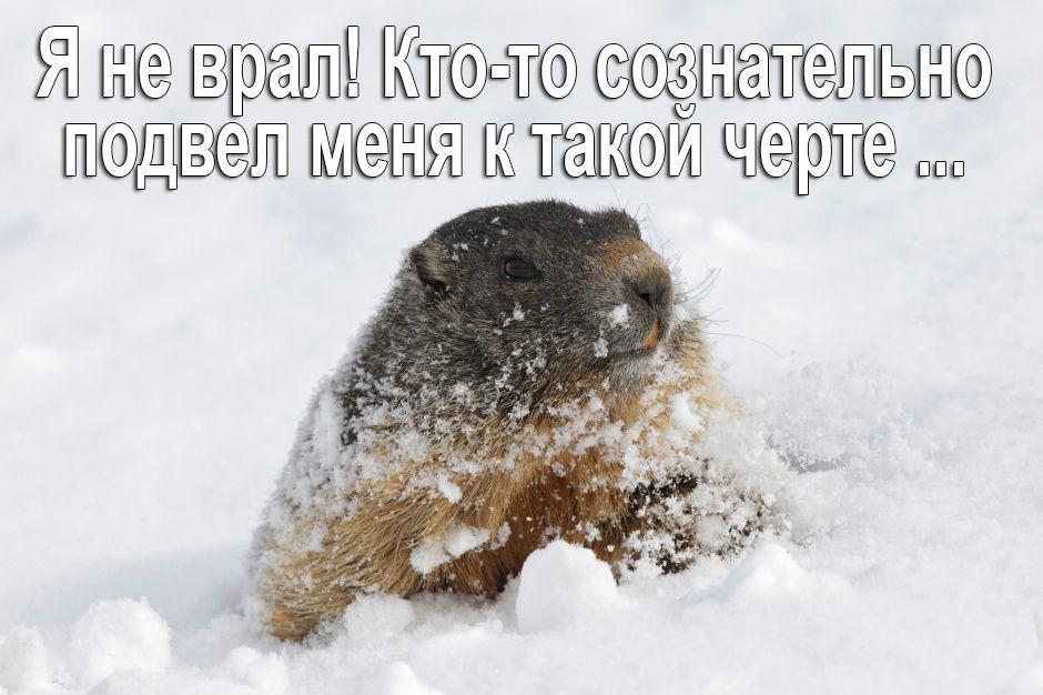 ДСНС попереджає українців про погіршення погодних умов: очікуються сильні снігопади і вітри - Цензор.НЕТ 7181