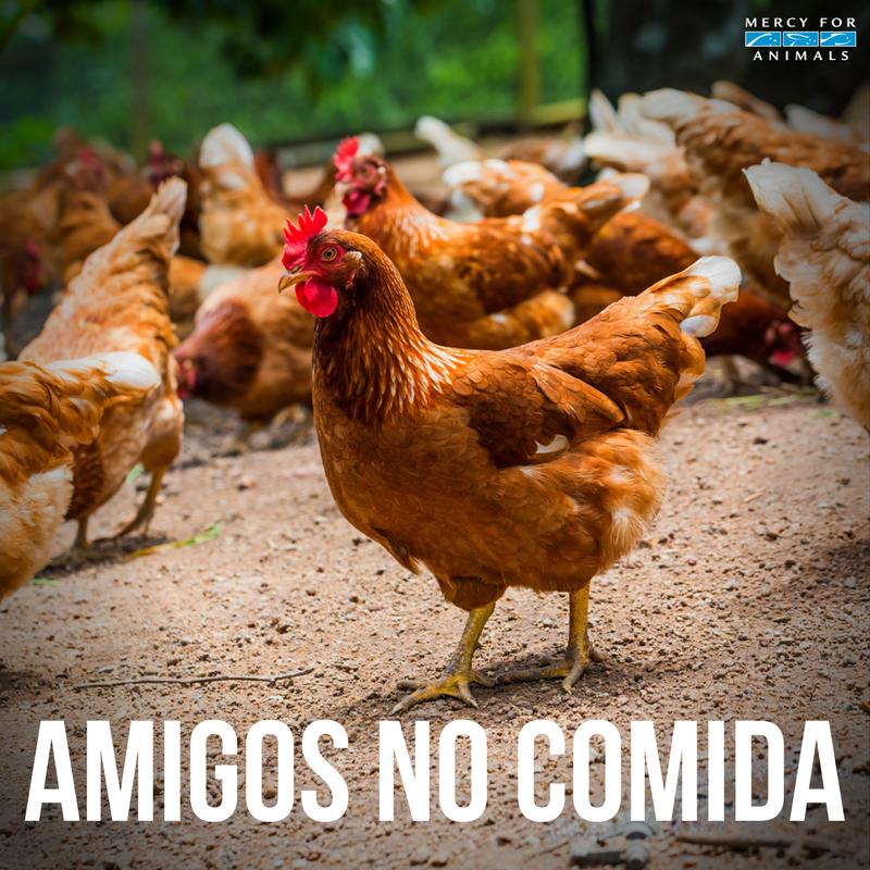 Deja a los animales fuera de tu plato 🙏🏼...