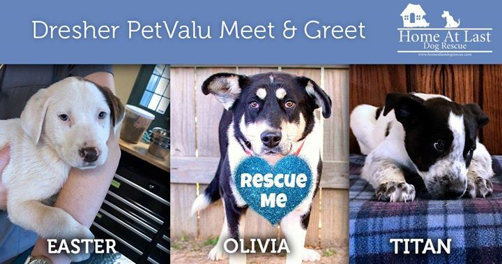 Home At Last On Twitter Join Us At The Dresher Pet Valu Meet