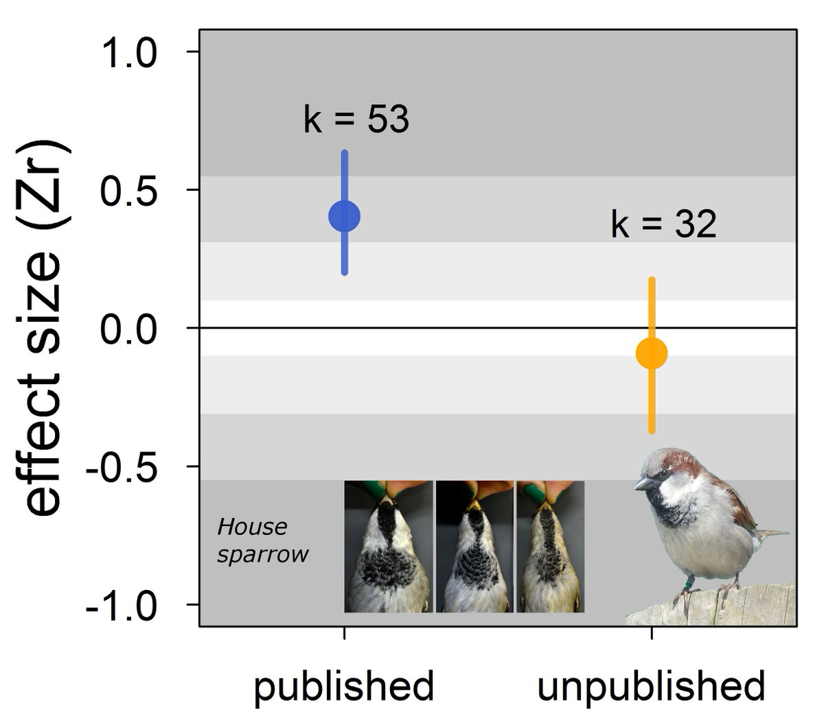 Our meta-analysis does not support the status signalling hypothesis in house sparrows. Instead, it highlights strong and misleading publication bias. biorxiv.org/content/early/… … #ornithology #metaanalysis #animalbehaviour #publicationbias