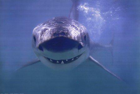 Happy #SaturdayMorning! Shark smiles fro...