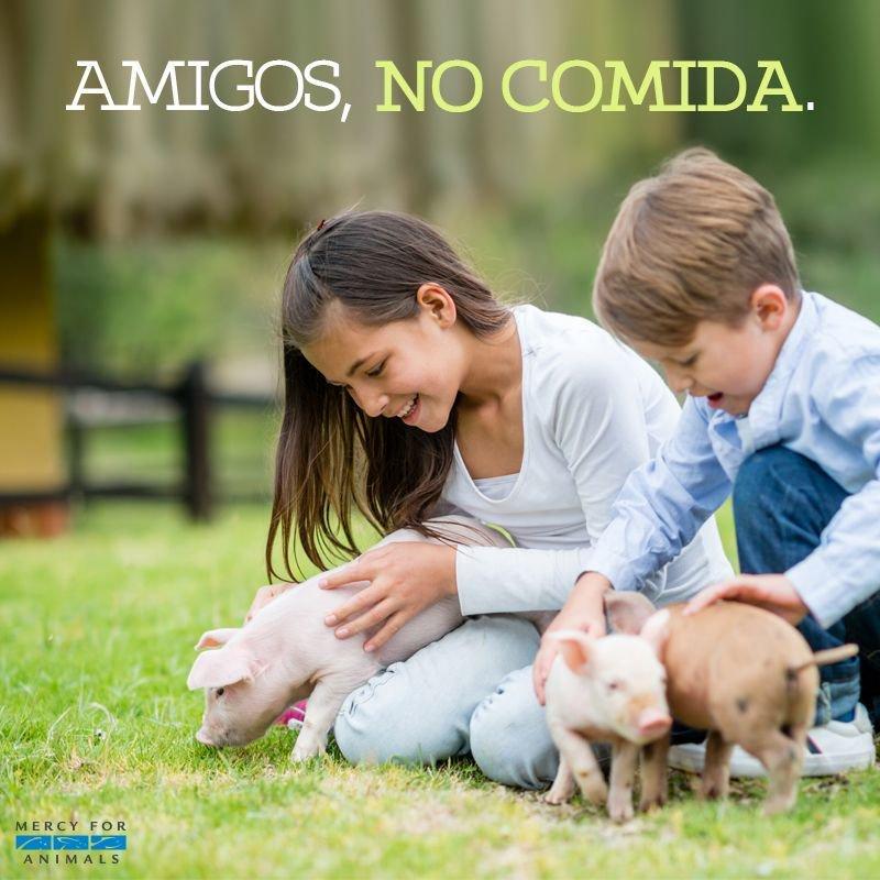 Los animales son nuestros amigos. 💙❤💚💯 h...