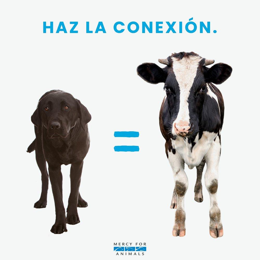 Los animales son nuestros amigos, no nue...