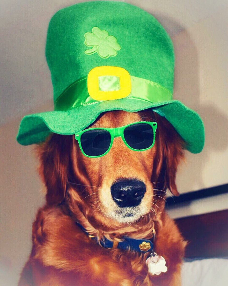 Happy #StPatricksDay from me and Loubout...