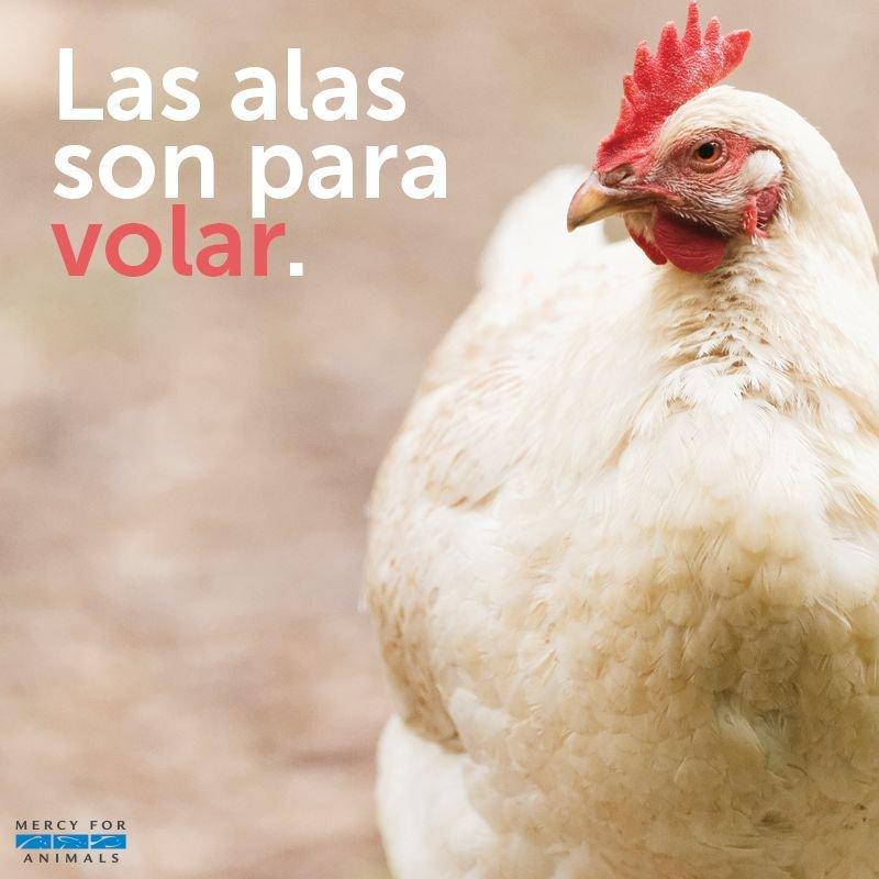 Las gallinas merecen ser libres. Vivir #...