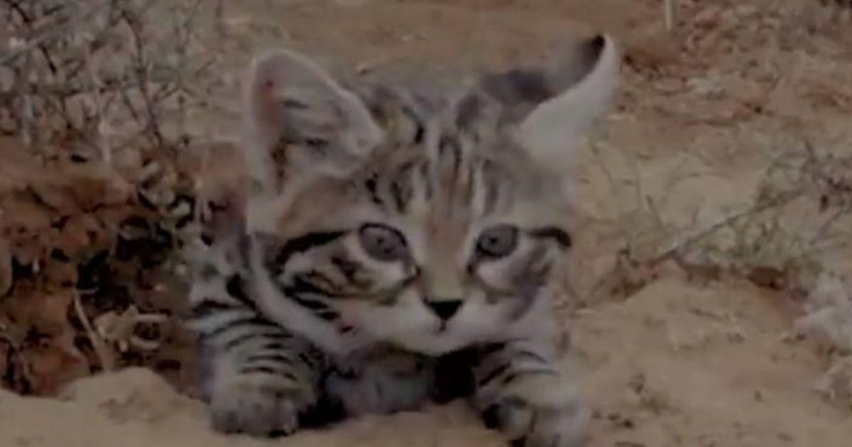 세상에서 가장 치명적으로 위험한 고양이는 너무 귀엽다  https://t.co/Ua9uj4r6d3