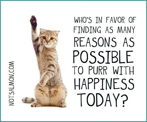 Image result for happiness is caturday images