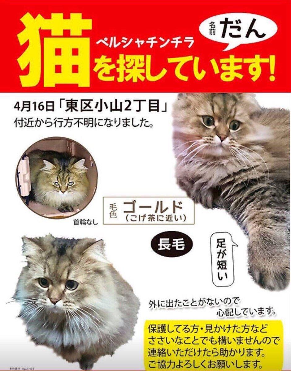 熊本地震で行方不明だった猫が帰ってきました(涙) 近所の方が貼り紙を見て連絡して...