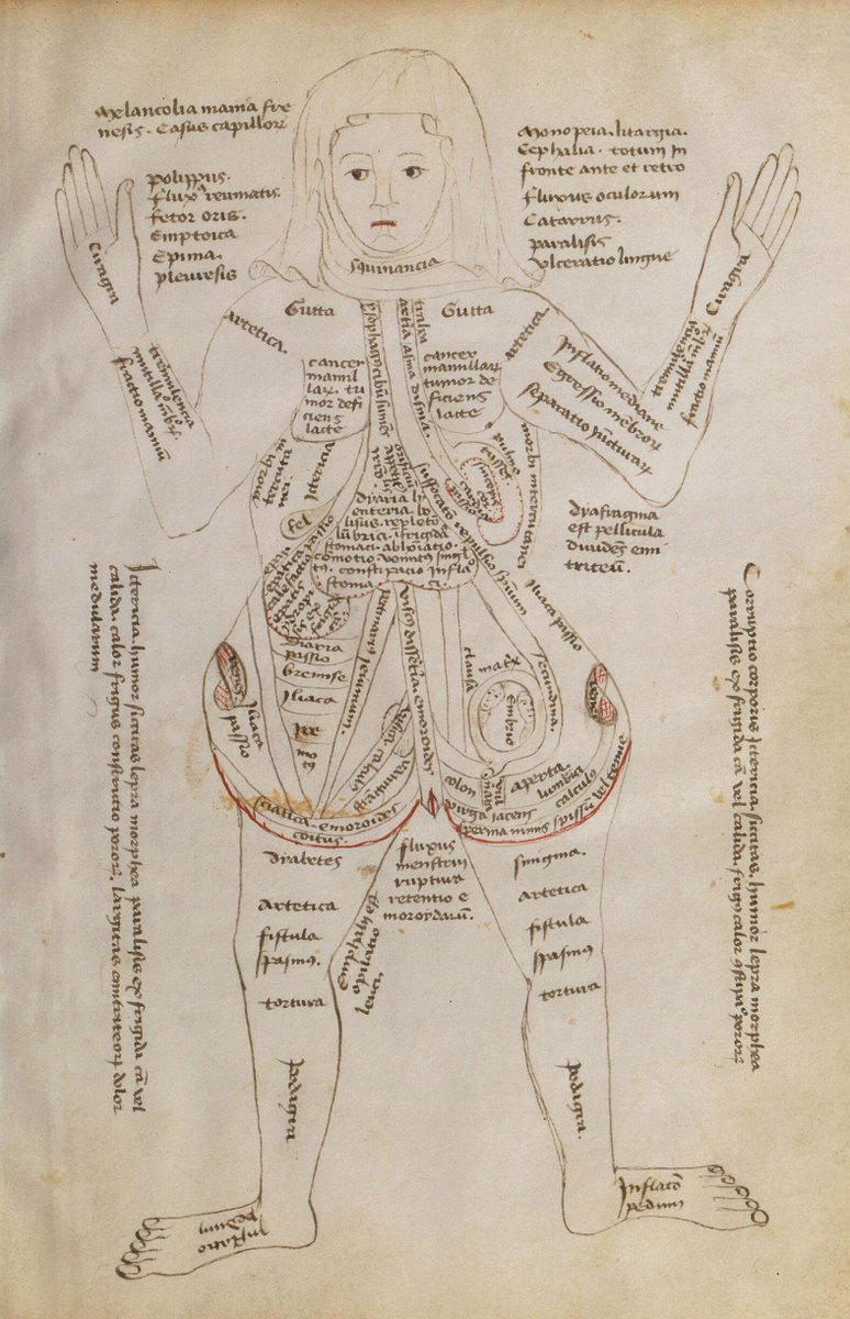 a 15th-century #diagram of a #pregnant #woman, her #body covered with  descriptions of its different parts and potential #diseases