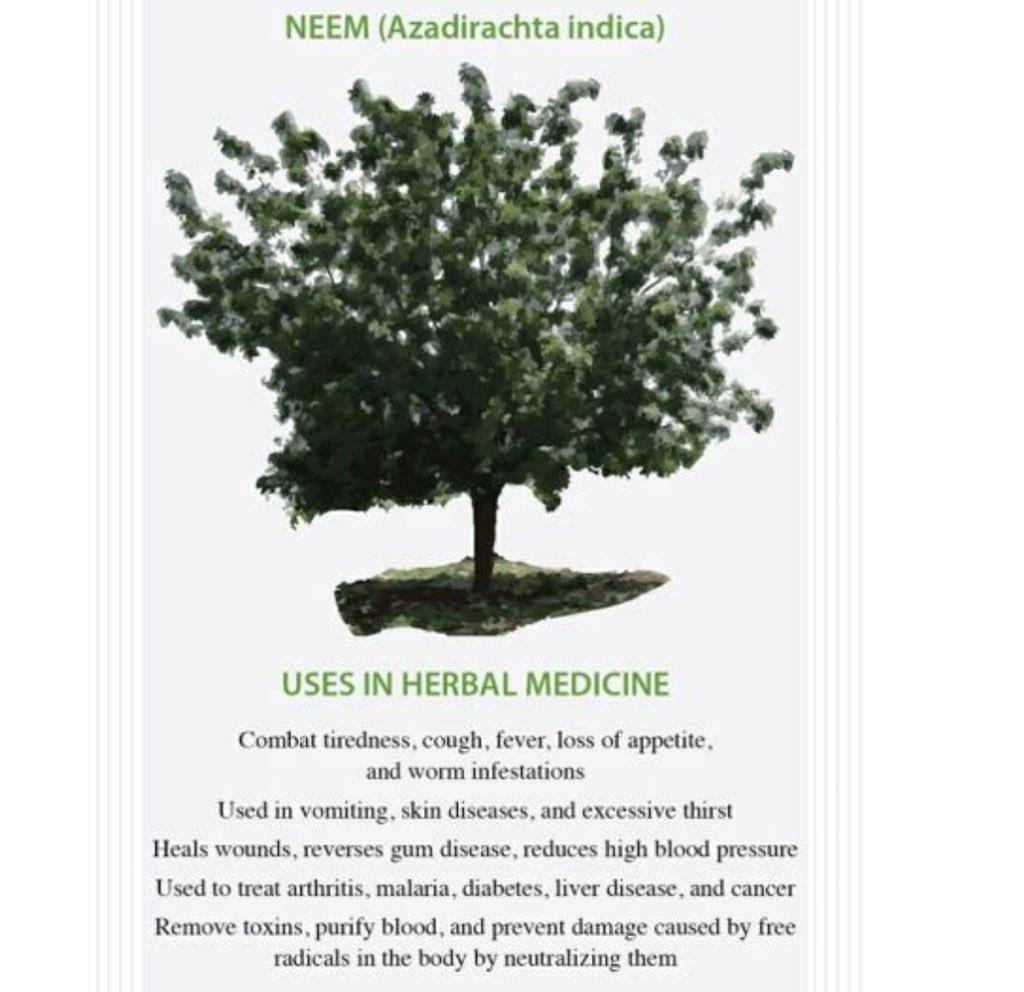 essay on neem tree in hindi 'बरगद' भारत का राष्ट्रीय वृक्ष है। इसे कई बार भारतीय बरगद के रूप में भी जाना जाता है। इसे 'वट' वृक्ष के नाम से भी जाना जाता है।.
