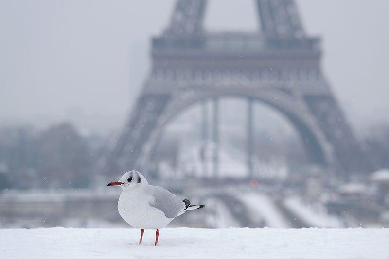 Météo. La Tour Eiffel fermée dimanche matin en raison de la neige https://t.co/4efyjXfsjR