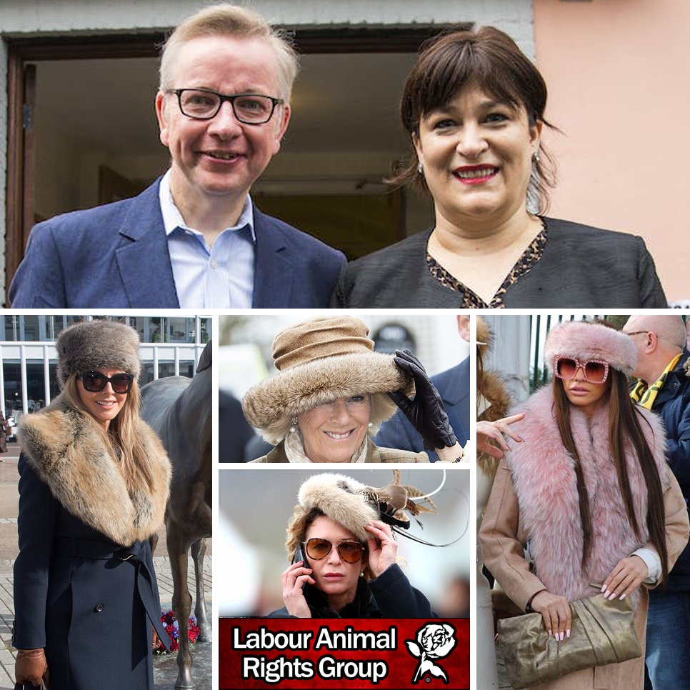 The wife of @michaelgove disgracefully welcomes the return of fur to the #CheltenhamFestival in her latest article. @WestminsterWAG aka Sarah Vine states she wears REAL fur and supports @carolvorders @KatiePrice and Camilla Parker Bowles. #FurFreeBritain dailymail.co.uk/debate/article…