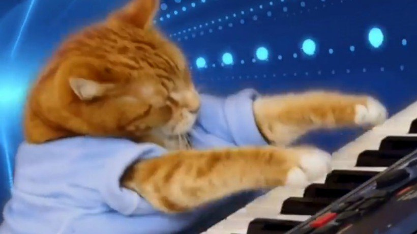 Murió gato que consiguió la fama en Yout...