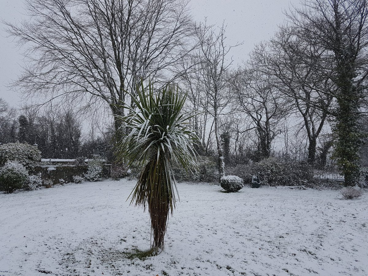 Snow gathering in Limerick. Picturesque...