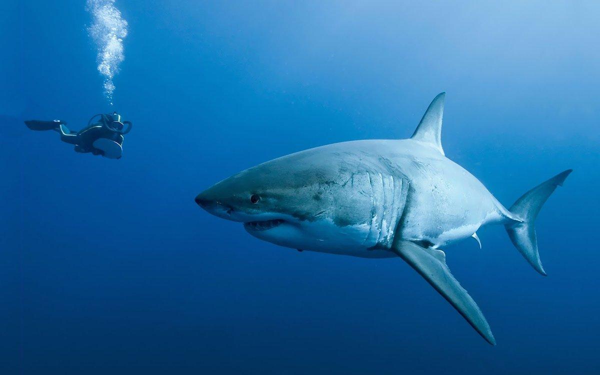 #SundayMorning shark sighting! 🌊😍🦈 https...