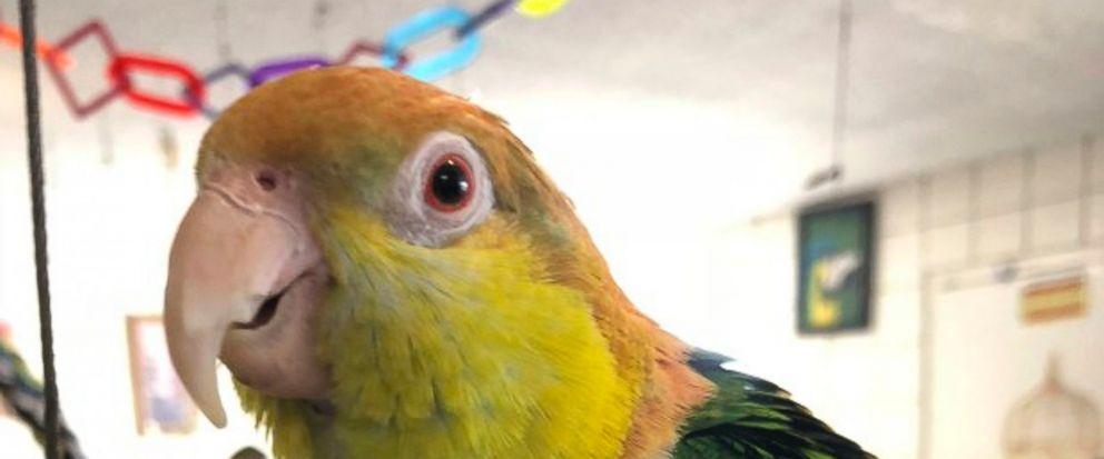 Thieves swipe birds worth thousands of dollars. https://t.co/ZnsmPNCo1s https://t.co/9kSYcJEVXK