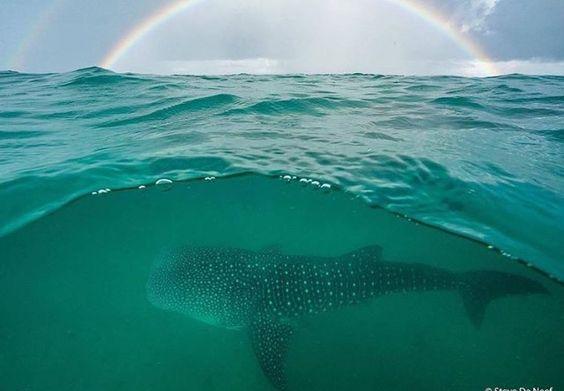 Somewhere under the rainbow, I reside! 🌈...