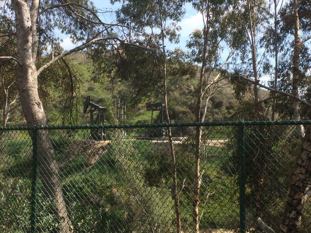 download bowerbirds australian natural