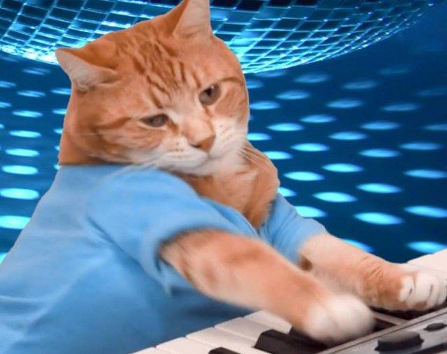 Bento, gato que ficou conhecido na internet por tocar teclado, morre aos 9 anos https://t.co/fbGfkj6Aan - via @Emais_Estadao