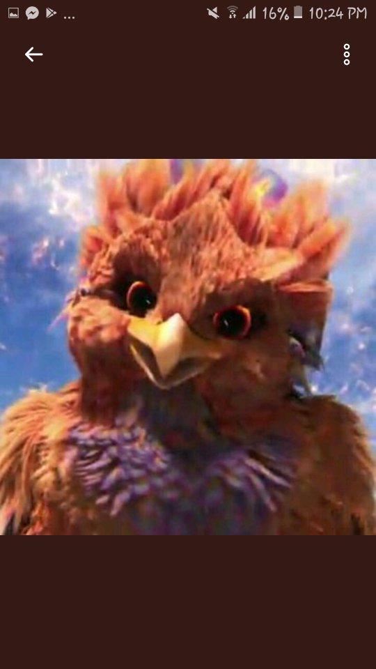 Whats your name cute birdie?  Uwi na kit...