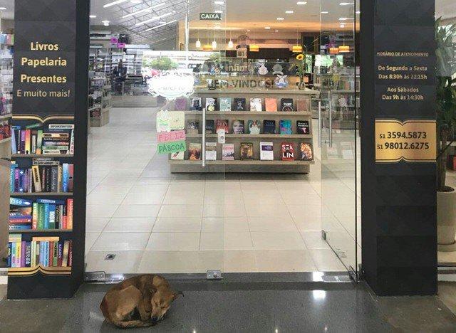 Cachorro 'rouba' livro e é flagrado pelas câmeras de livraria em Novo Hamburgo https://t.co/ya2ActVsAE