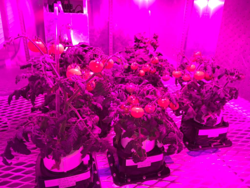 A new batch of science will be space bound early next month to be studied on the @Space_Station. From an experiment that'll survey severe thunderstorms to one that'll help us understand how plants grow in microgravity, get all the @ISS_Research details: https://t.co/Q3jHAQm2dD