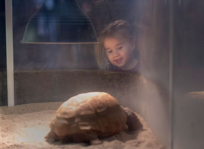 'A childhood memory people get to live over and over again': Beloved 95-year-old gopher tortoise named Gus has been charming visitors to  in  since 194#Halifax2 🐢  https://t.co/nv2qlSJxOu