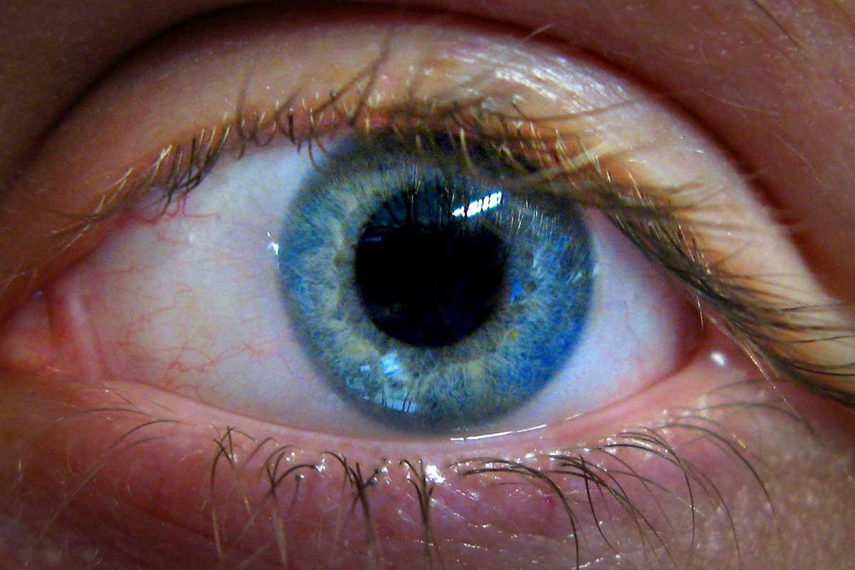 Stem cell therapy reverses sight loss and lets people read again https://t.co/H7ZFprIDii