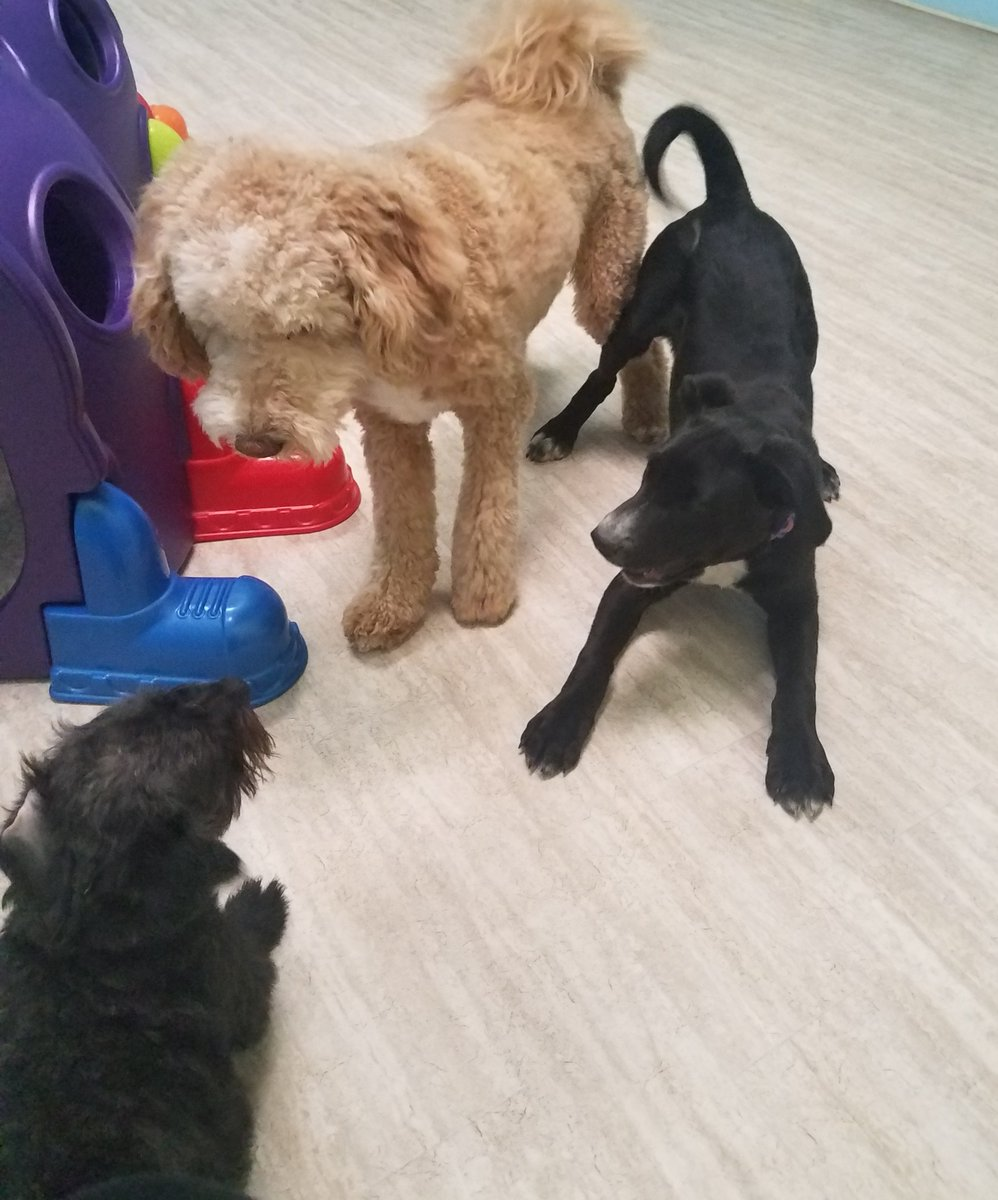 Scout and Harry ask Millie to play!