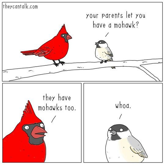 Theycantalk Is A New Wildlife Cartoon Ive Discovered And Its Amazing They Dont Have Twitter But You Can See Their Tumblr Here