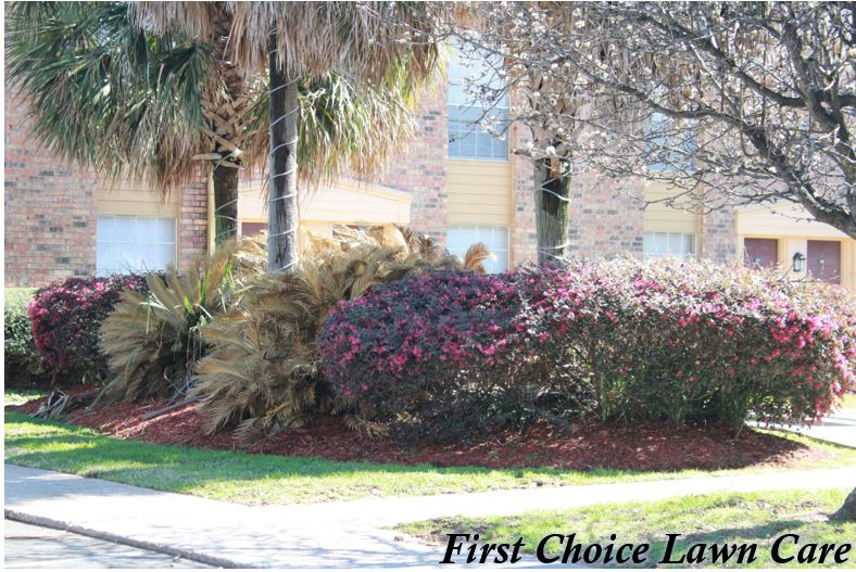 Let First Choice Lawn Care handle all of your lawn and landscaping needs!!  Free Estimates. Call now 318-861-6050 or visit us at http://fclc.cc or  follow us ... - First Choice Lawn Care (@firstchoice6050) Twitter