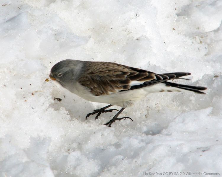 Past and future impact of #climatechange on foraging habitat suitability in a high-alpine bird species: Management options to buffer against global warming effects ow.ly/PVom30j259O | #ornithology @DavideScridel @RaphaelArlettaz @DanC_eco Biological Conservation
