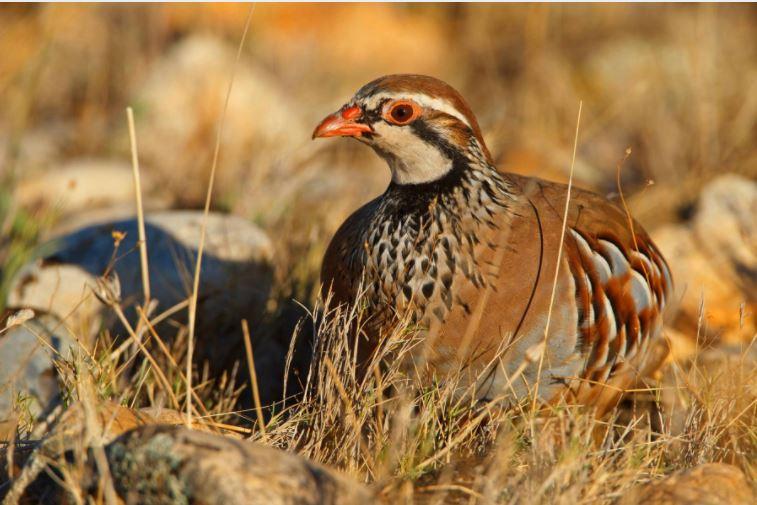 #Biodiversité Les oiseaux disparaissent des campagnes françaises à une vitesse «vertigineuse»: un tiers de moins en quinze ans. L'alerte du Museum d'histoire naturelle et du CNRS, à lire dans La Matinale, tout juste publiée https://t.co/uXeRlViPNi