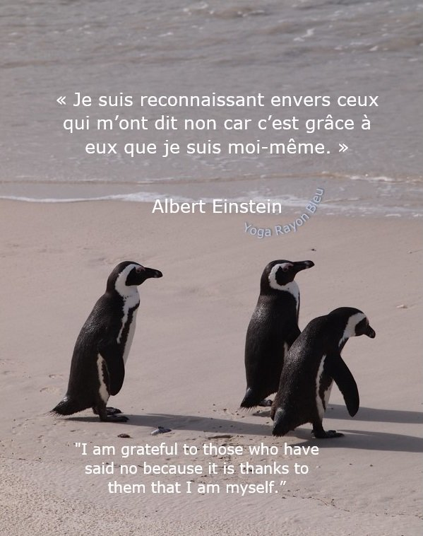 "«Je suis reconnaissant envers...» #AlbertEinstein &quot;I am grateful to those who have said no because it is thanks to them that I am myself."" Photo #YogaRayonBleu 2012 AfriqueduSud #yoga #citations #yogafrance #yogalove<br>http://pic.twitter.com/YCZF2UMmtS"