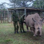 RT @MagicalKenya: Deeply saddened by the death of...